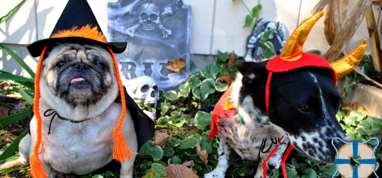 Celebrating Halloween with Your Pets